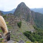 Machi Picchu Solo travel