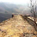 Wild Wall